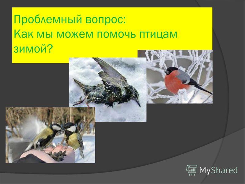 Проблемный вопрос: Как мы можем помочь птицам зимой?