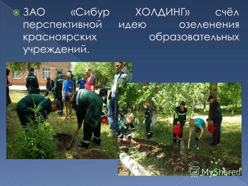 ЗАО «Сибур ХОЛДИНГ» счёл перспективной идею озеленения красноярских образовательных учреждений.