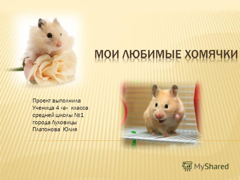 Проект выполнила Ученица 4 «а» класса средней школы 1 города Луховицы Платонова Юлия