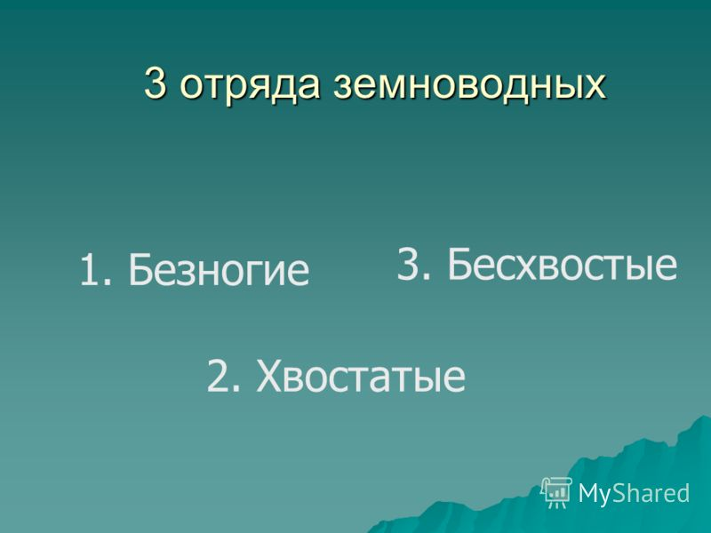 3 отряда земноводных 1. Безногие 2. Хвостатые 3. Бесхвостые