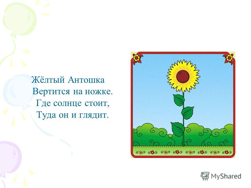 Жёлтый Антошка Вертится на ножке. Где солнце стоит, Туда он и глядит.