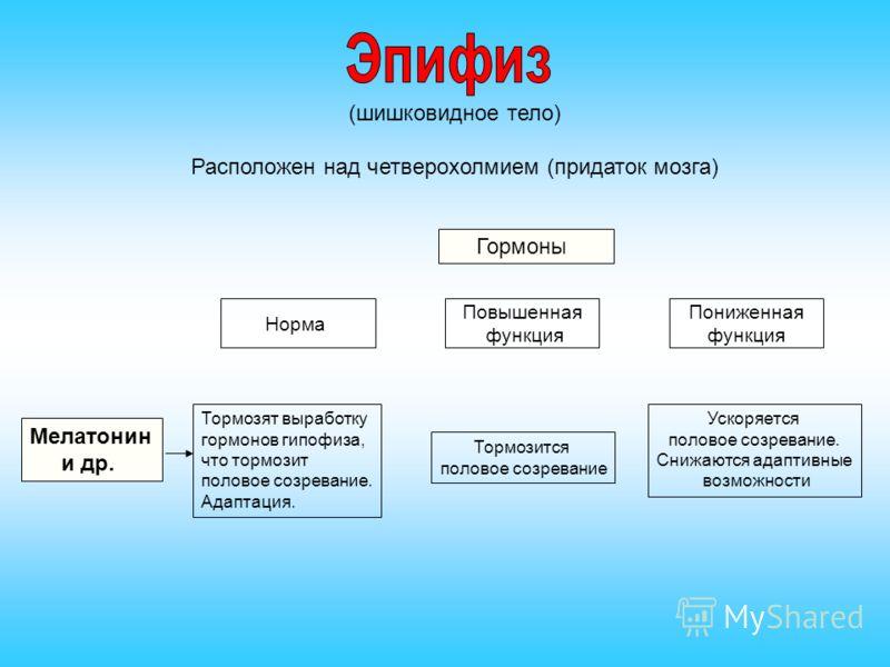 Тело Шишковидное