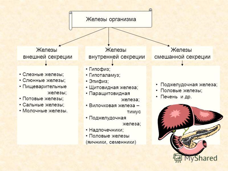 Железа Внутренней Секреции фото