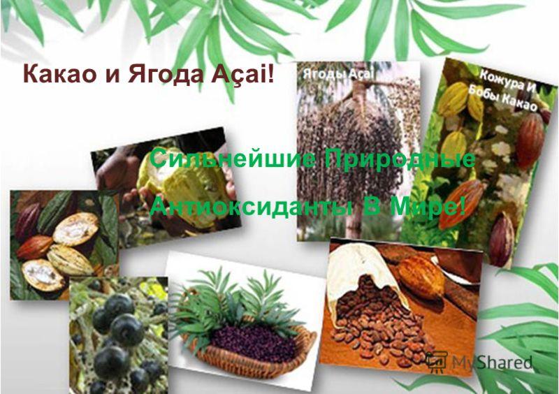 Какао и Ягода Açai! Сильнейшие Природные Антиоксиданты В Мире!