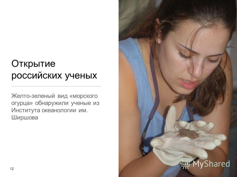 Открытие российских ученых Желто-зеленый вид «морского огурца» обнаружили ученые из Института океанологии им. Ширшова 12