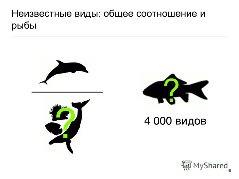Неизвестные виды: общее соотношение и рыбы 15