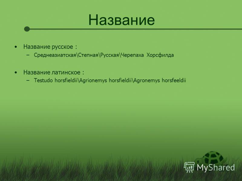 Название Название русское : –Среднеазиатская\Степная\Русская\Черепаха Хорсфилда Название латинское : –Testudo horsfieldii\Agrionemys horsfieldii\Agronemys horsfeeldii