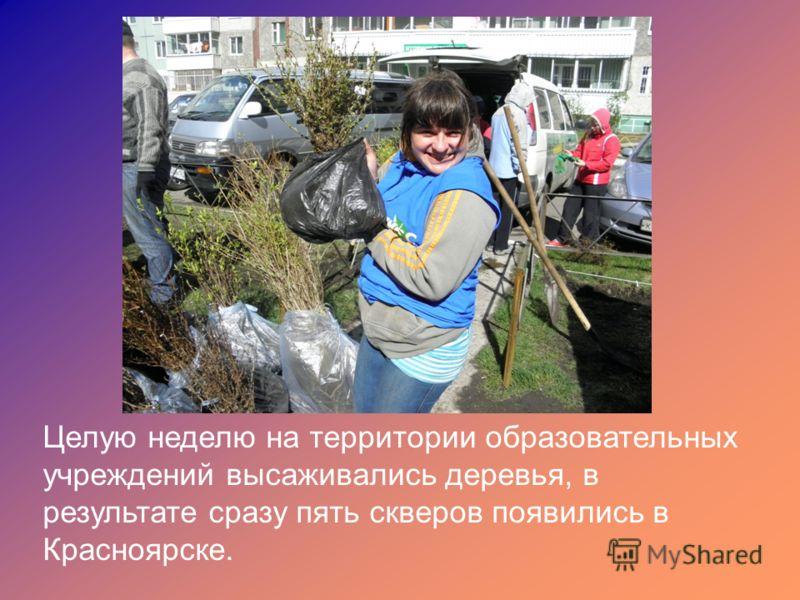Целую неделю на территории образовательных учреждений высаживались деревья, в результате сразу пять скверов появились в Красноярске.