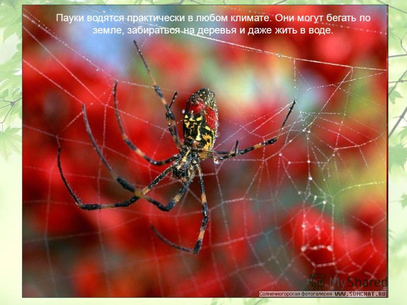 Пауки водятся практически в любом климате. Они могут бегать по земле, забираться на деревья и даже жить в воде.