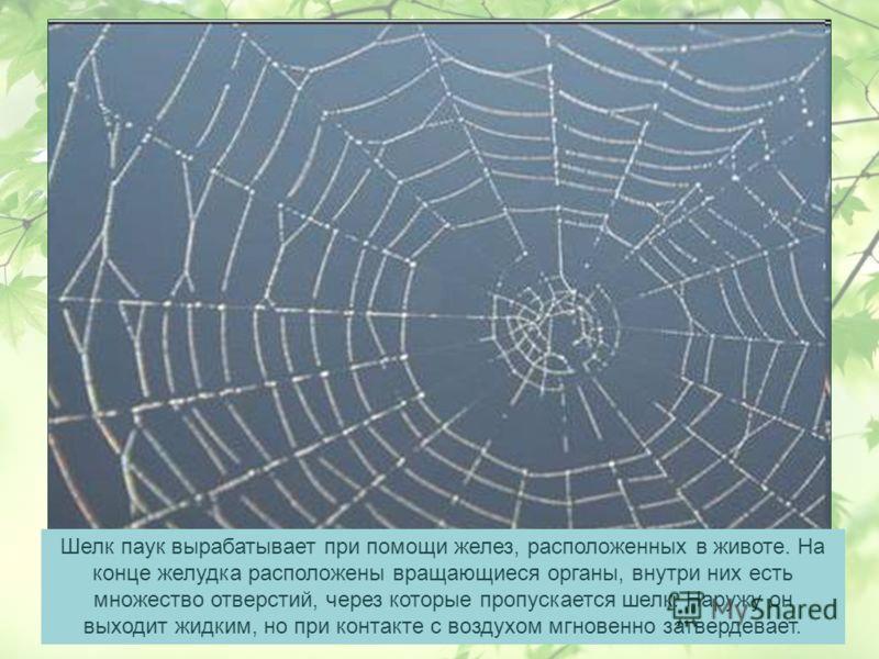 Шелк паук вырабатывает при помощи желез, расположенных в животе. На конце желудка расположены вращающиеся органы, внутри них есть множество отверстий, через которые пропускается шелк. Наружу он выходит жидким, но при контакте с воздухом мгновенно зат