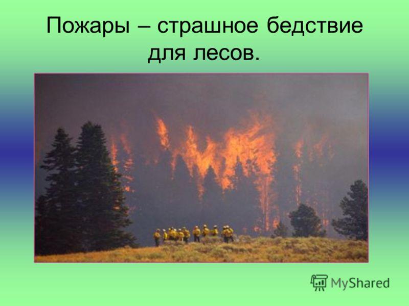 Пожары – страшное бедствие для лесов.