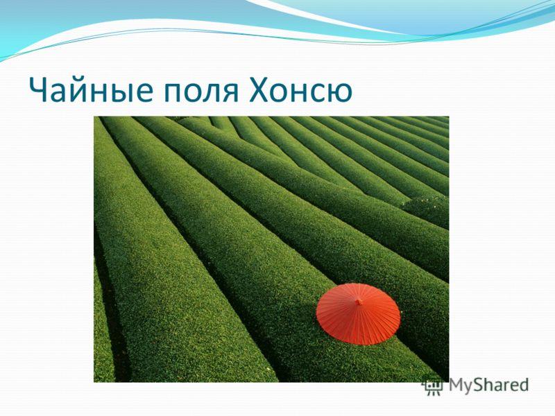 Чайные поля Хонсю