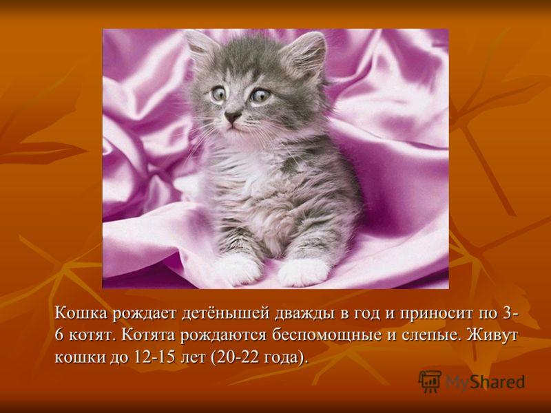 Кошки очень чистоплотны, постоянно умываются. Потовые железы находятся только на нижней стороне лап, поэтому у них почти нет своего запаха. Шерсть кошек не имеет жировой смазки, под дождём намокает как вата.