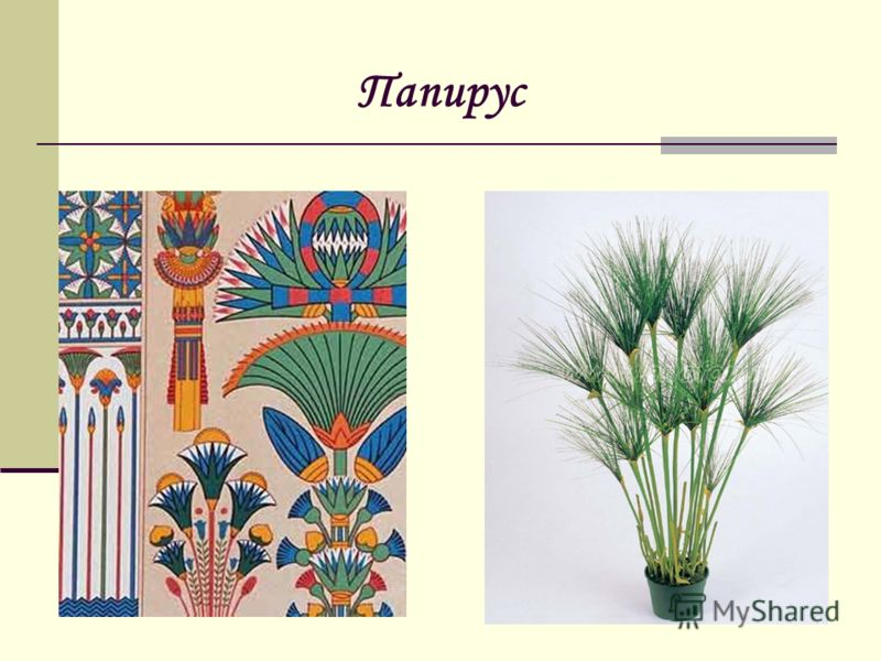 Папирус