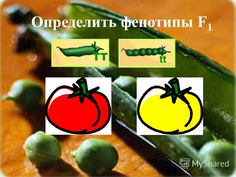 ТТ tt Определить фенотипы F 1 СС сс