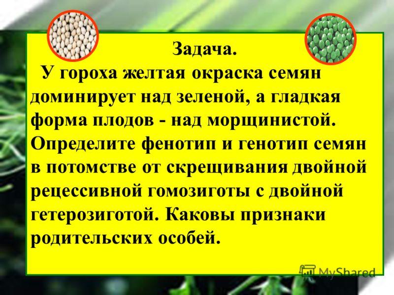 Задача. У гороха желтая окраска семян доминирует над заленой, а гладкая форма плодов - над мороинистой. Определите фенотип и генотип семян в потомстве от скрещивания двойной рецессивной гомозиготы с двойной гетерозиготой. Каковы признаки родительских