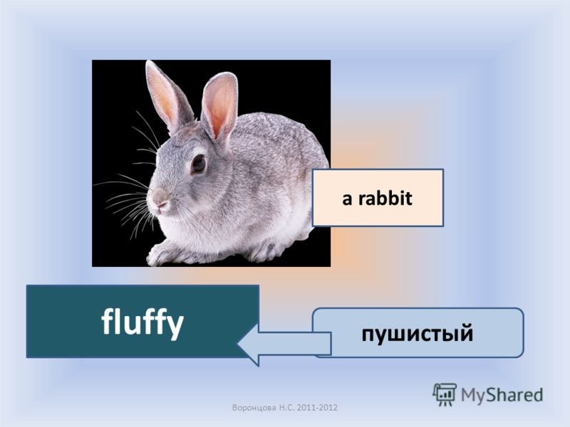 Воронцова Н.С. 2011-2012 a rabbit fluffy пушистый