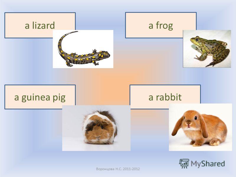 Воронцова Н.С. 2011-2012 a frog a lizard a guinea piga rabbit