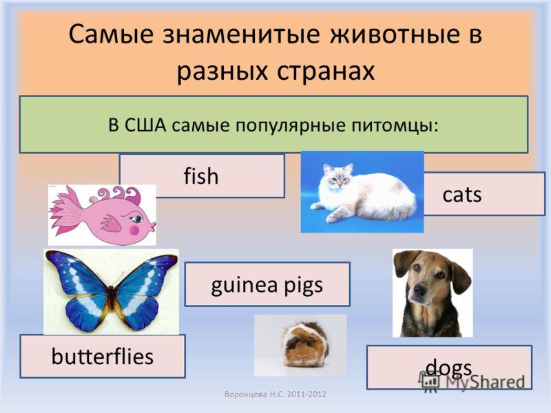 Самые знаменитые животные в разных странах Воронцова Н.С. 2011-2012 В США самые популярные питомцы: fish cats butterflies dogs guinea pigs