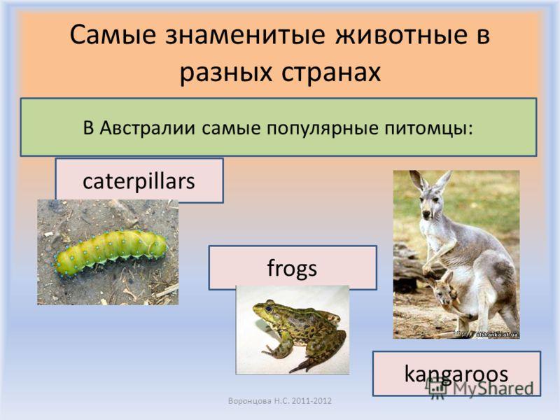 Самые знаменитые животные в разных странах Воронцова Н.С. 2011-2012 В Австралии самые популярные питомцы: caterpillars kangaroos frogs