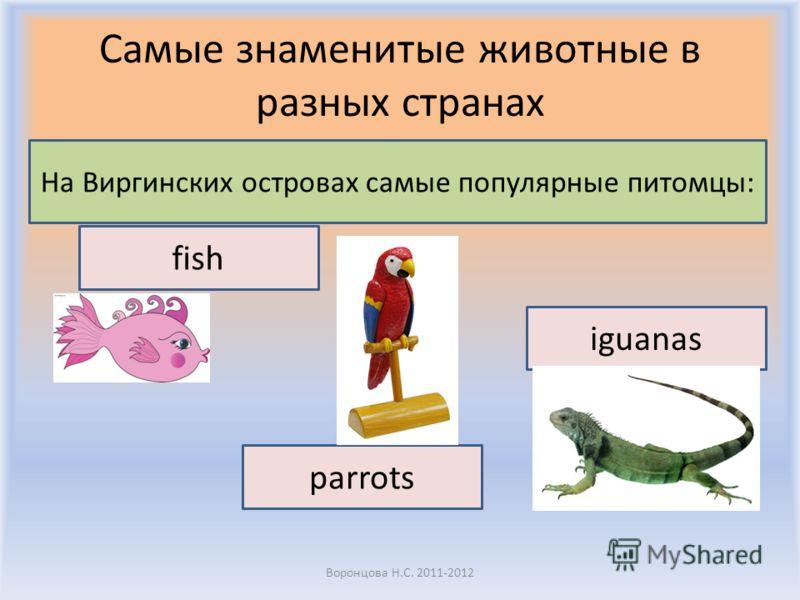Самые знаменитые животные в разных странах Воронцова Н.С. 2011-2012 На Виргинских островах самые популярные питомцы: fish iguanas parrots