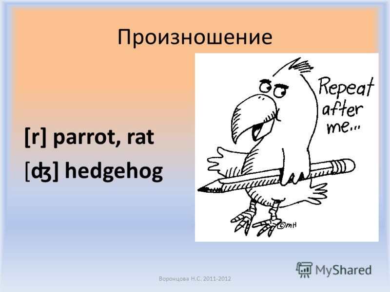 Воронцова Н.С. 2011-2012 1 2 3 4 5 6 What number is the parrot?