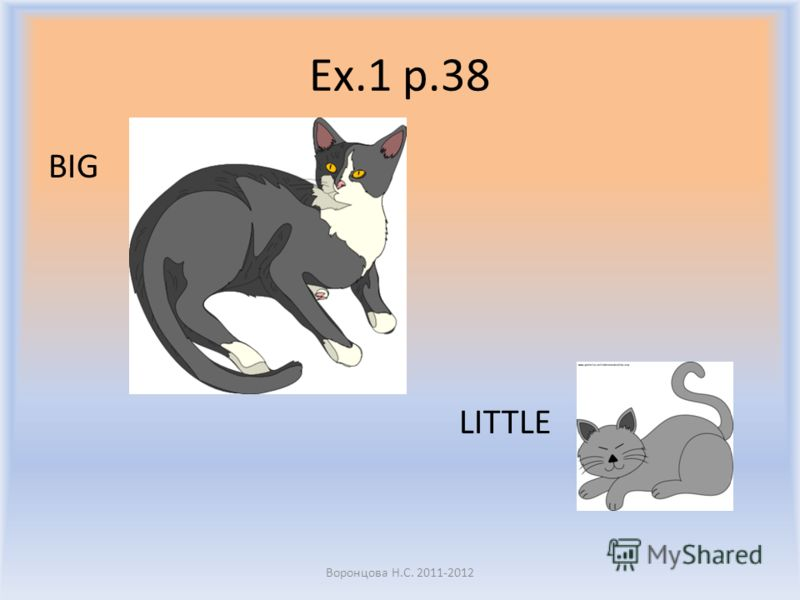 Ex.1 p.38 A cat A dog Воронцова Н.С. 2011-2012