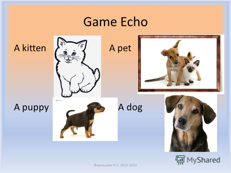 Game Echo A kitten A pet A puppy A dog Воронцова Н.С. 2011-2012