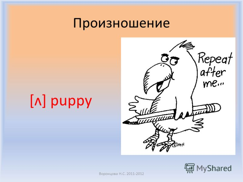 Произношение [ʌ] puppy Воронцова Н.С. 2011-2012