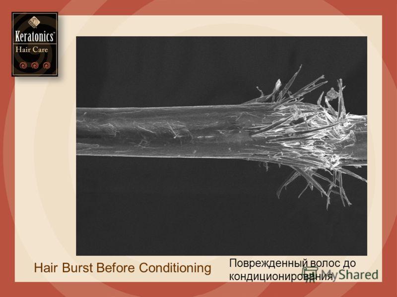 Поврежденный волос до кондиционирования Hair Burst Before Conditioning