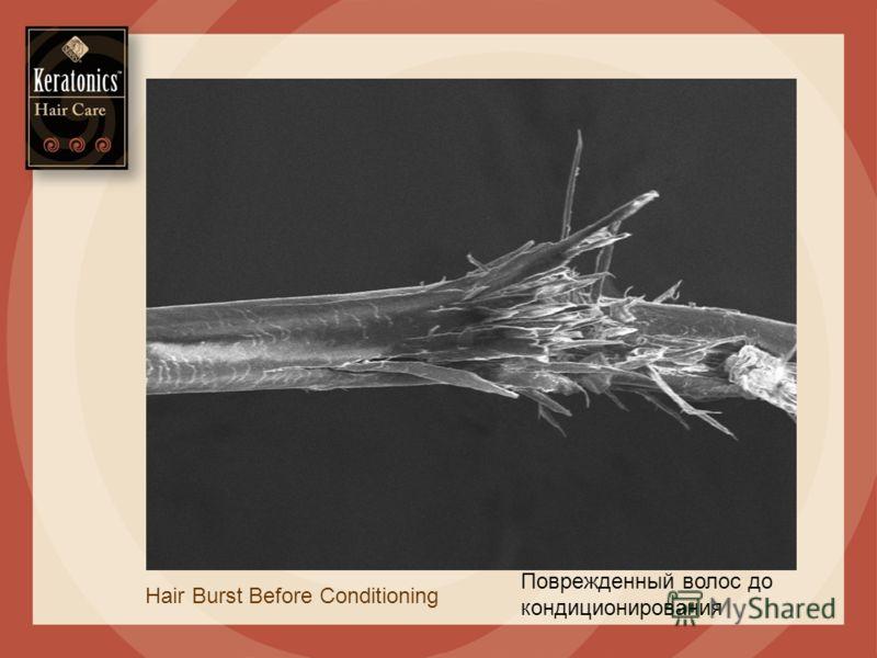 Hair Burst Before Conditioning Поврежденный волос до кондиционирования