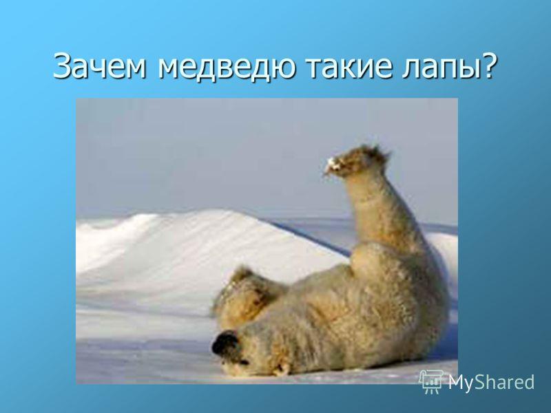 Зачем медведю такие лапы?