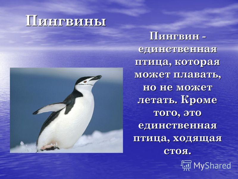 Пингвины Пингвин - единственная птица, которая может плавать, но не может летать. Кроме того, это единственная птица, ходящая стоя.