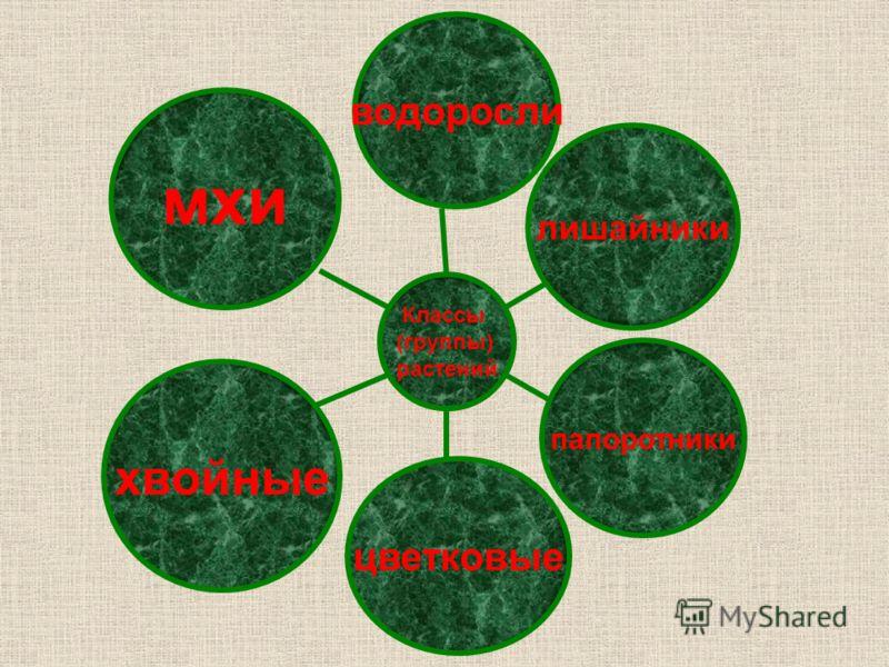 мхи хвойные цветковые папоротники <a href='http://www.myshared.ru/slide/97123/' title='лишайники'>лишайники</a> водоросли Классы (группы) растений