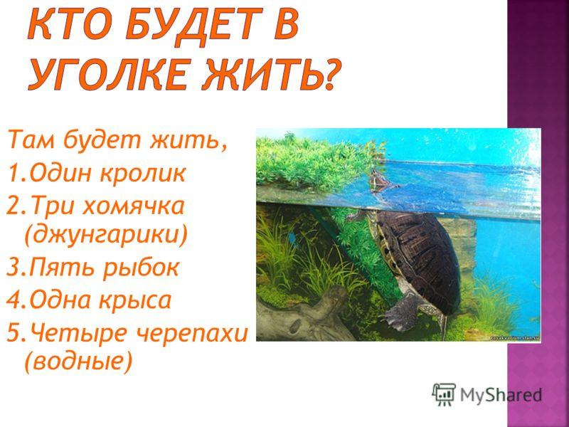 Там будет жить, 1. Один кролик 2. Три хомячка (джунгарики) 3. Пять рыбок 4. Одна крыса 5. Четыре черепахи (водные)