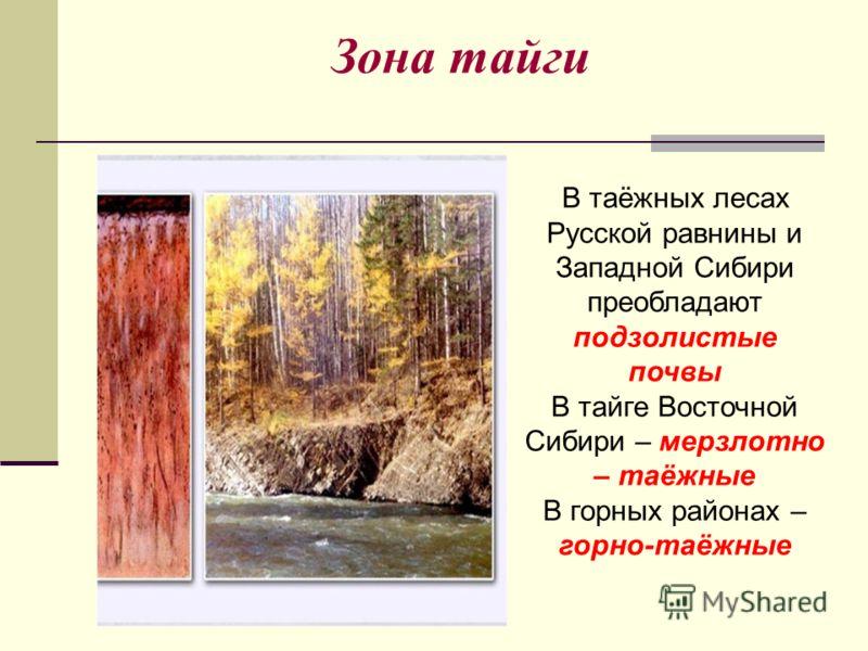 Зона тайги В таёжных лесах Русской равнины и Западной Сибири преобладают подзолистые почвы В тайге Восточной Сибири – мерзлотно – таёжные В горных рай