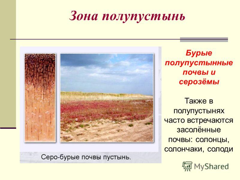 Зона полупустынь Бурые полупустынные почвы и серозёмы Также в полупустынях часто встречаются засолённые почвы: солонцы, солончаки, солоди