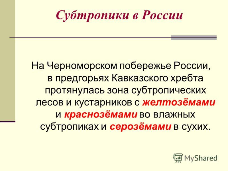 Субтропики в России На Черноморском побережье России, в предгорьях Кавказского хребта протянулась зона субтропических лесов и кустарников с желтозёмами и краснозёмами во влажных субтропиках и серозёмами в сухих.