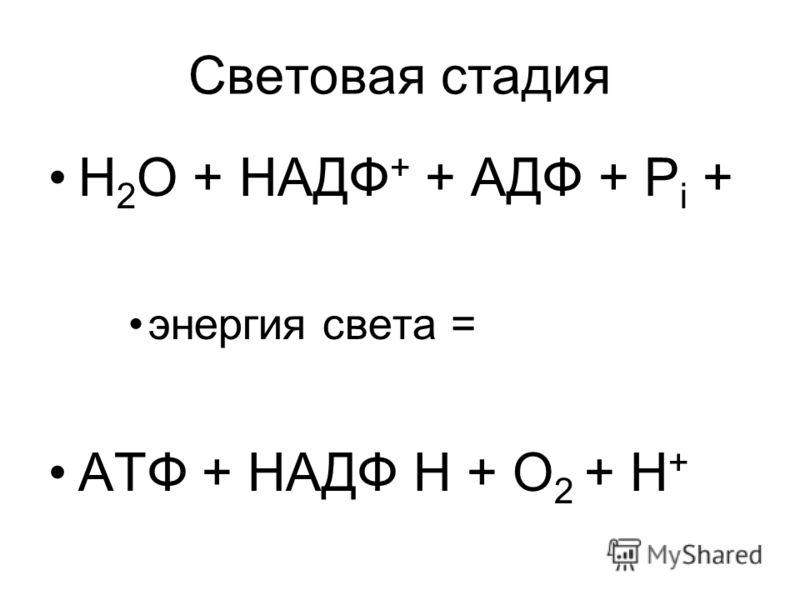 Световая стадия Н 2 О + НАДФ + + АДФ + Р i + энергия света = АТФ + НАДФ Н + О 2 + Н +