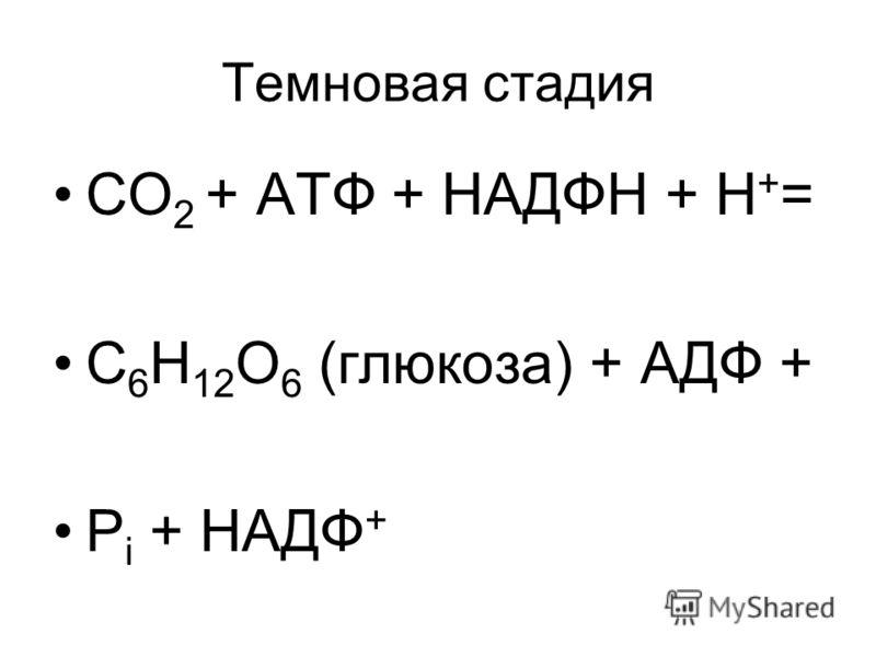 Темновая стадия СО 2 + АТФ + НАДФН + Н + = С 6 Н 12 О 6 (глюкоза) + АДФ + Р i + НАДФ +