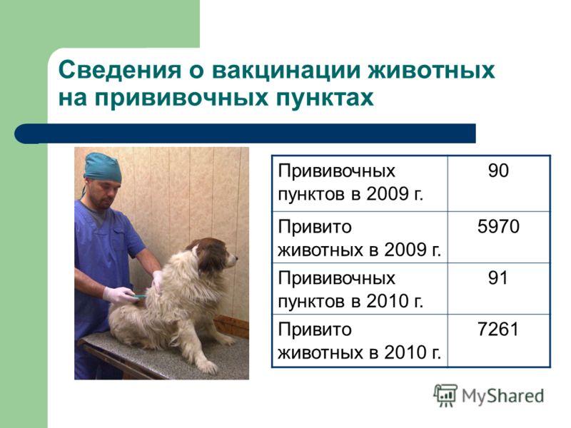 Сведения о вакцинации животных на прививочных пунктах Прививочных пунктов в 2009 г. 90 Привито животных в 2009 г. 5970 Прививочных пунктов в 2010 г. 91 Привито животных в 2010 г. 7261