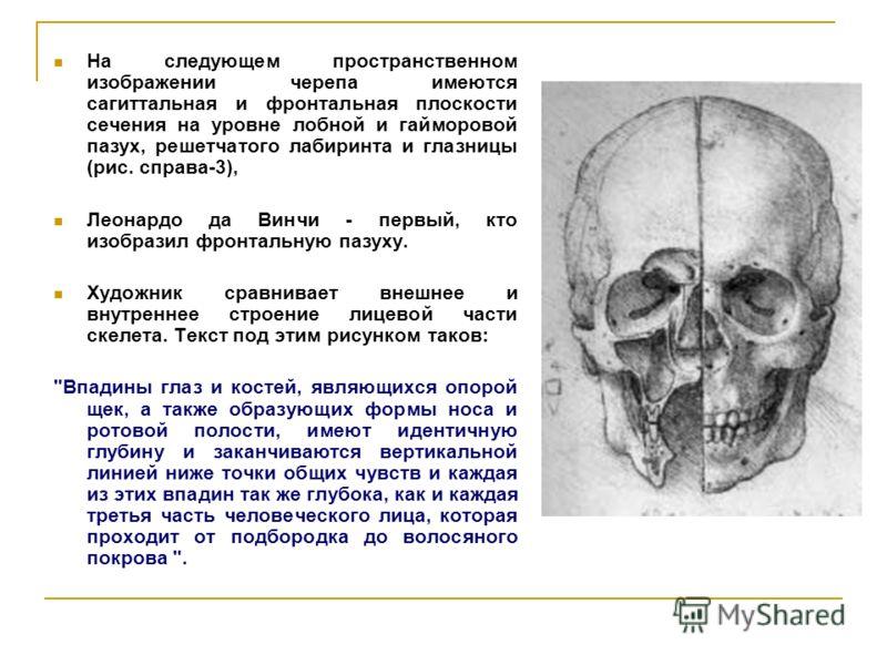 На следующем пространственном изображении черепа имеются сагиттальная и фронтальная плоскости сечения на уровне лобной и гайморовой пазух, решетчатого лабиринта и глазницы (рис. справа-3), Леонардо да Винчи - первый, кто изобразил фронтальную пазуху.