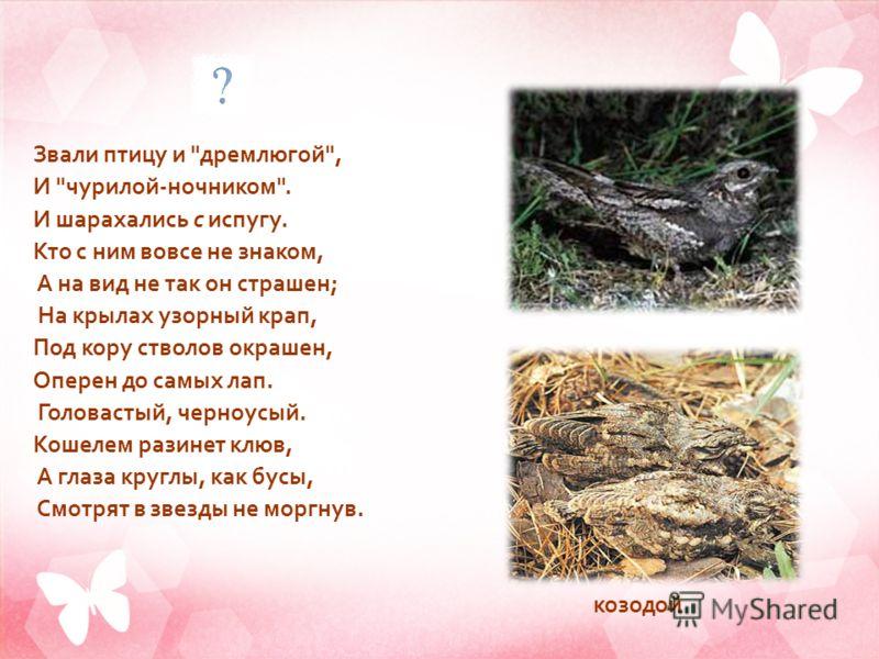 Звали птицу и