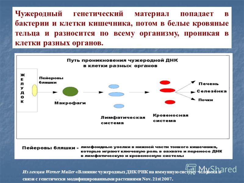 Чужеродный генетический материал попадает в бактерии и клетки кишечника, потом в белые кровяные тельца и разносится по всему организму, проникая в клетки разных органов. Из лекции Werner Muller «Влияние чужеродных ДНК/РНК на иммунную систему человека