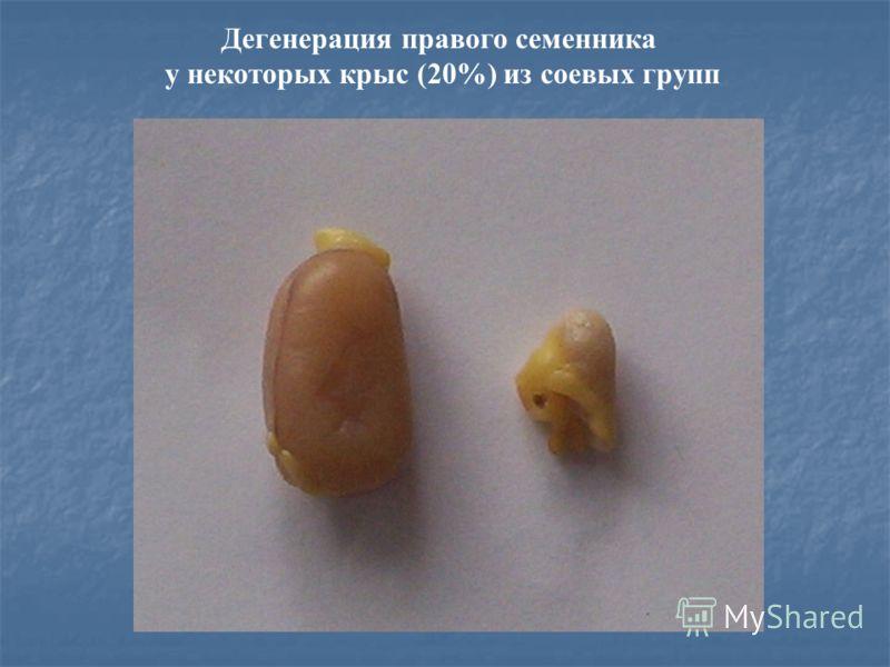 Дегенерация правого семенника у некоторых крыс (20%) из соевых групп