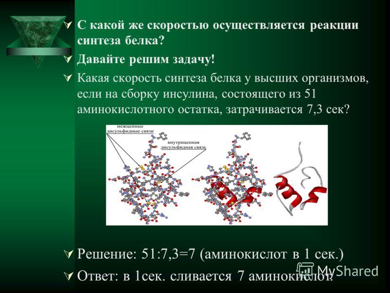 С какой же скоростью осуществляется реакции синтеза белка? Давайте решим задачу! Какая скорость синтеза белка у высших организмов, если на сборку инсулина, состоящего из 51 аминокислотного остатка, затрачивается 7,3 сек? Решение: 51:7,3=7 (аминокисло