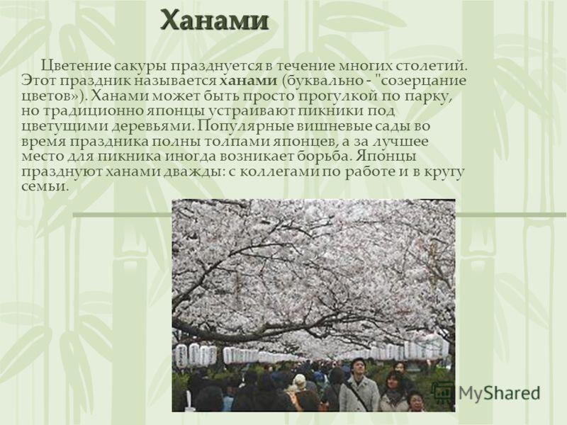 Сакура Сакура – один из видов вишни. Ветка сакуры – символ Японии. Когда она зацветает, все от мала до велика целыми семьями собираются в парках, чтобы полюбоваться бело- розовыми нежными цветами.