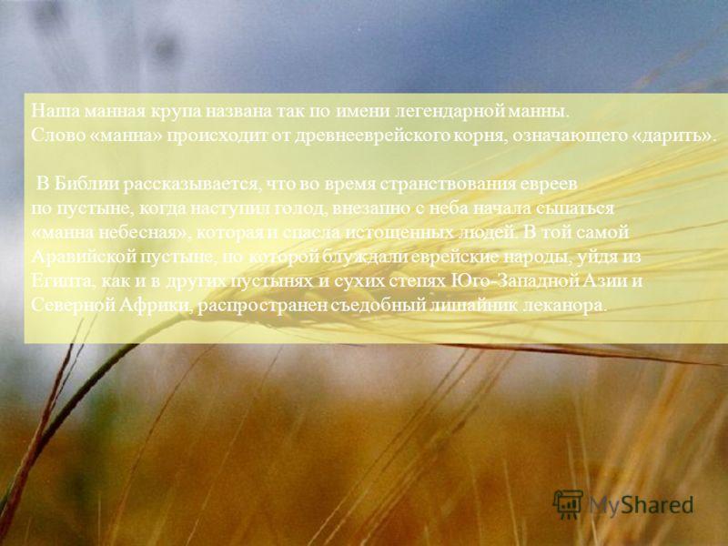 Наша манная крупа названа так по имени легендарной манны. Слово «манна» происходит от древнееврейского корня, означающего «дарить». В Библии рассказывается, что во время странствования евреев по пустыне, когда наступил голод, внезапно с неба начала с