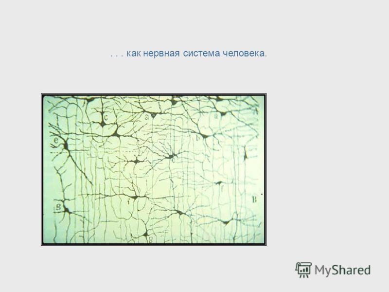 Нейрофизиология + Математика + Философия Уоррен Маккалок был ключевой фигурой в расширении сферы исследования кибернетики. Несмотря на то, что он был психиатром по образованию, Уоррен Маккалок сочетал свои знания с нейрофизиологией, математикой и фил