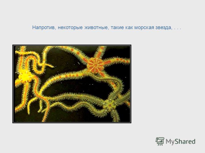 Подобный принцип используется в живых организмах. Человек имеет наиболее сложную нервную систему и мозг. Это позволяет ему заниматься многими различными видами активности и иметь сложное строение тела. Humans – Most Complex Nervous System